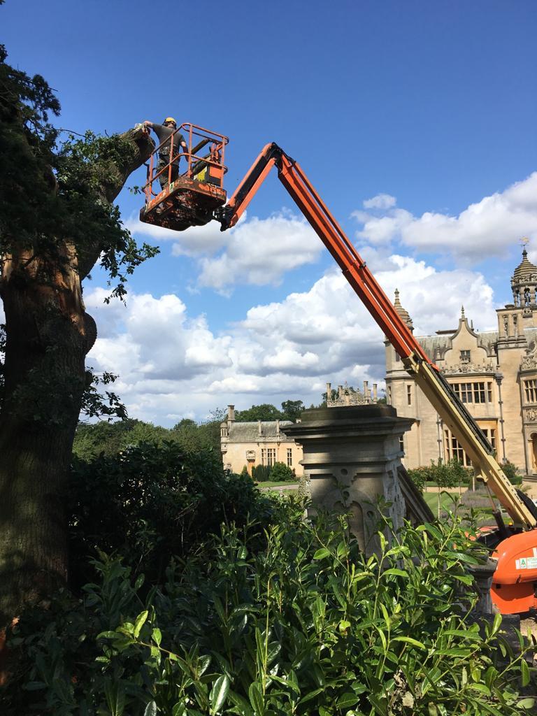 Paul Bavin cutting tall tree